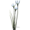 White Lilies in Blue - Rośliny -