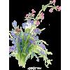 Wild Flower Bunch - Plants -