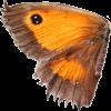 Wings - Niwi - Animals -