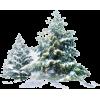 Winter Tree - Plants -