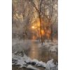Winter forest and river - Nature -