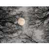 Winters moon - Nature -