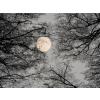 Winters moon - Natura -