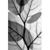 X-Ray Leaves - Uncategorized -