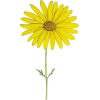 Yellow Daisy Flower - Ilustracije -