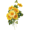 Yellow Daisy Flower - Ilustrationen -