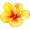 Yellow_Exotic_Flower_PNG_Clipart_Picture - Plantas -