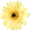 Yellow Flower - Plants -