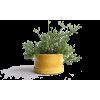 Yellow. - Pflanzen -