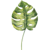 Анна - Plants -