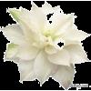 квіти - Plantas -