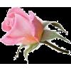 квіти - Rośliny -