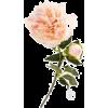 квіти - Piante -