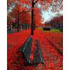 Осінь - Natureza -