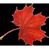 осінні листя - Natural -