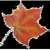 осінні листя - Nature -