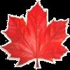 осінні листя - Природа -