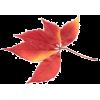 осінні листя - Priroda -