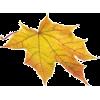 осінні листя - 自然 -