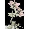 *** - Plantas -
