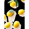 *** - Fruit -