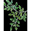 вапро - Plants -