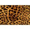 леопард - Animals -