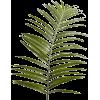 Папайя - Plants -
