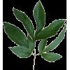 Изумруд - Plants -