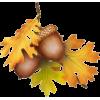 acorn - Natureza -