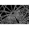 Net - Illustrations -
