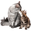 maca - Animals -