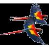 parrots flyin` - Tiere -