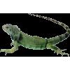 reptil - Animals -