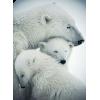 animals - Animals -