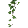 a plant 1 - Plants -