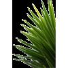 a plant - Plants -
