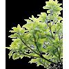 a plant - Biljke -
