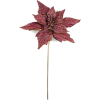 a poinsettia burgundy - Plants -