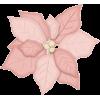 a poinsettia flower - Plants -