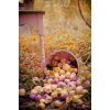 apple autumn photo - Uncategorized -