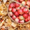 apples - Uncategorized -