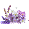 asia12 (flowers) - 植物 -