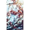 autumn - Pozadine -