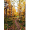 autumn - Background -