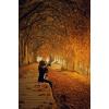 autumn - Ozadje -