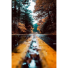 autumn - Sfondo -