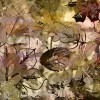 autumn background - Sfondo -