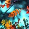 autumn colors - Nature -