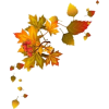 autumn leaves - Natura -